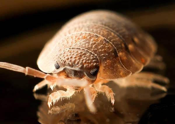 Best Bed Bug Control Treatment Melbourne