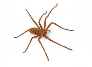 Spider pest control Bundoora VIC, Australia