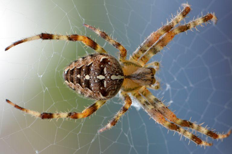 Best spider pest control Roxburgh Park